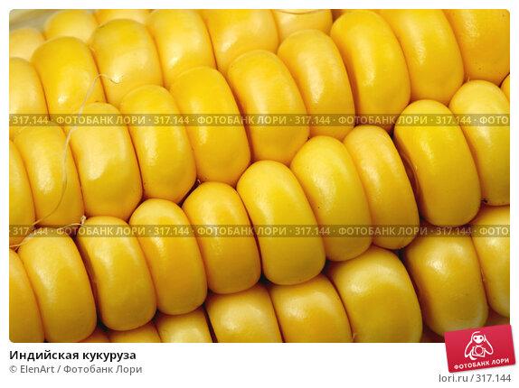 Индийская кукуруза, фото № 317144, снято 17 августа 2017 г. (c) ElenArt / Фотобанк Лори