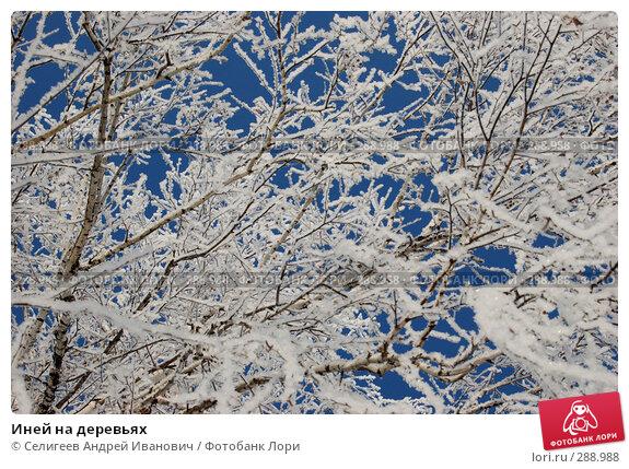 Иней на деревьях, фото № 288988, снято 4 марта 2008 г. (c) Селигеев Андрей Иванович / Фотобанк Лори