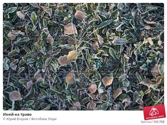Иней на траве, фото № 109708, снято 27 марта 2017 г. (c) Юрий Егоров / Фотобанк Лори