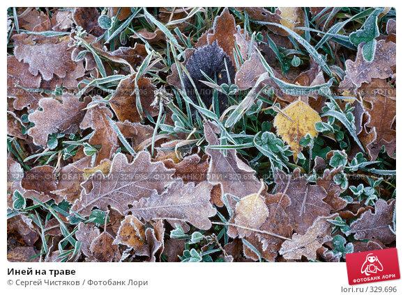 Иней на траве, фото № 329696, снято 24 марта 2017 г. (c) Сергей Чистяков / Фотобанк Лори