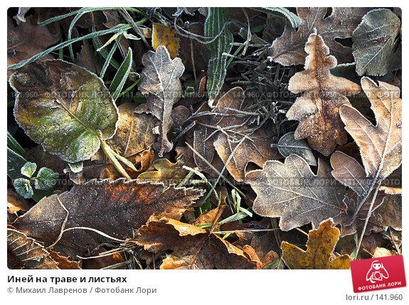 Иней на траве и листьях, фото № 141960, снято 10 декабря 2005 г. (c) Михаил Лавренов / Фотобанк Лори