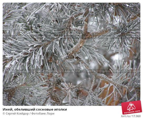 Иней, обеливший сосновые иголки, фото № 17060, снято 25 января 2007 г. (c) Сергей Ксейдор / Фотобанк Лори