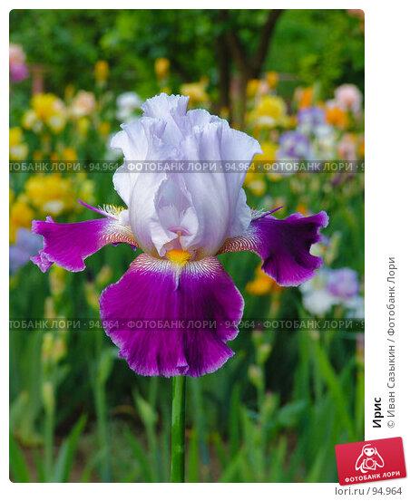 Купить «Ирис», фото № 94964, снято 20 мая 2005 г. (c) Иван Сазыкин / Фотобанк Лори