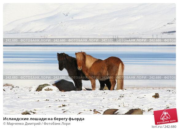 Исландские лошади на берегу фьорда, фото № 242680, снято 8 марта 2008 г. (c) Марченко Дмитрий / Фотобанк Лори