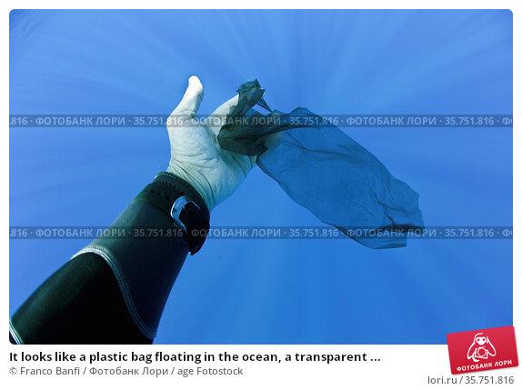 It looks like a plastic bag floating in the ocean, a transparent ... Стоковое фото, фотограф Franco Banfi / age Fotostock / Фотобанк Лори