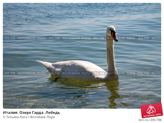 Италия. Озеро Гарда. Лебедь, фото № 293788, снято 26 апреля 2008 г. (c) Татьяна Лата / Фотобанк Лори
