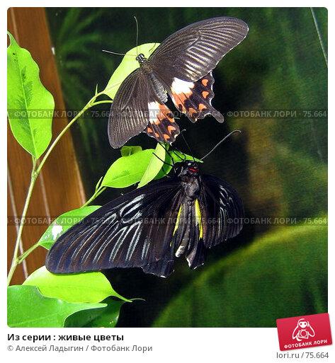 Из серии : живые цветы, фото № 75664, снято 15 июля 2007 г. (c) Алексей Ладыгин / Фотобанк Лори