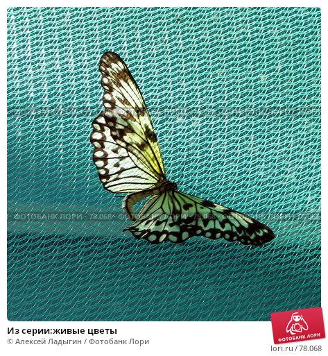 Купить «Из серии:живые цветы», фото № 78068, снято 15 июля 2007 г. (c) Алексей Ладыгин / Фотобанк Лори