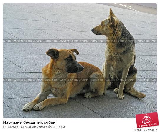 Из жизни бродячих собак, эксклюзивное фото № 286616, снято 8 мая 2008 г. (c) Виктор Тараканов / Фотобанк Лори