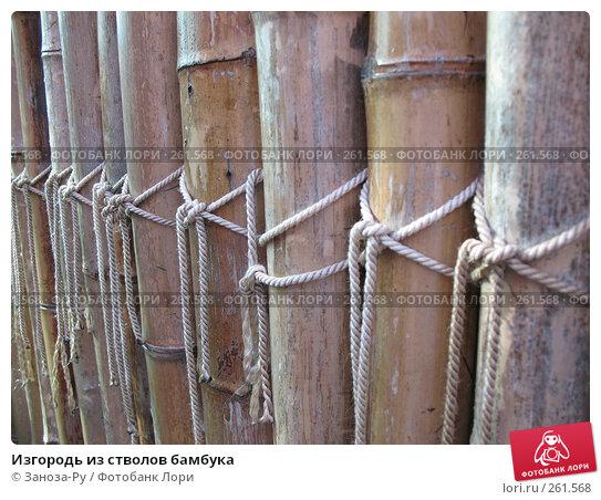 Купить «Изгородь из стволов бамбука», фото № 261568, снято 12 апреля 2008 г. (c) Заноза-Ру / Фотобанк Лори