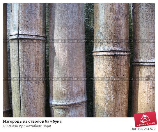 Изгородь из стволов бамбука, фото № 261572, снято 12 апреля 2008 г. (c) Заноза-Ру / Фотобанк Лори