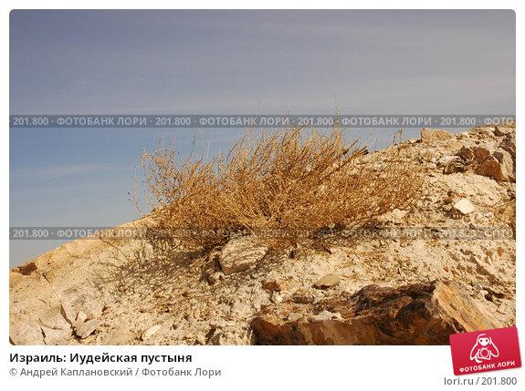 Израиль: Иудейская пустыня, фото № 201800, снято 31 декабря 2007 г. (c) Андрей Каплановский / Фотобанк Лори
