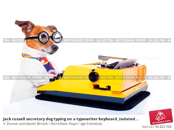 Jack russell secretary dog typing on a typewriter keyboard ,isolated... Стоковое фото, фотограф Zoonar.com/Javier Brosch / age Fotostock / Фотобанк Лори