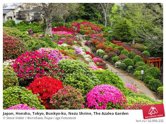 Japan, Honshu, Tokyo, Bunkyo-ku, Nezu Shrine, The Azalea Garden. Стоковое фото, фотограф Steve Vidler / age Fotostock / Фотобанк Лори
