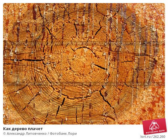 Как дерево плачет, фото № 262260, снято 13 апреля 2008 г. (c) Александр Литовченко / Фотобанк Лори