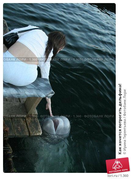 Как хочется потрогать дельфина!, эксклюзивное фото № 1360, снято 15 сентября 2005 г. (c) Ирина Терентьева / Фотобанк Лори