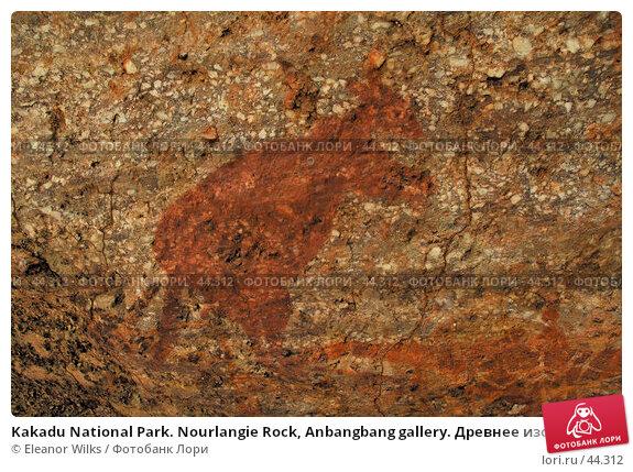 Купить «Kakadu National Park. Nourlangie Rock, Anbangbang gallery. Древнее изображение кенгуру», фото № 44312, снято 4 июня 2007 г. (c) Eleanor Wilks / Фотобанк Лори