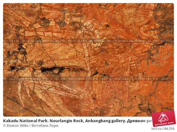 Kakadu National Park. Nourlangie Rock, Anbangbang gallery. Древние ритуальные изображения животных, фото № 44316, снято 4 июня 2007 г. (c) Eleanor Wilks / Фотобанк Лори