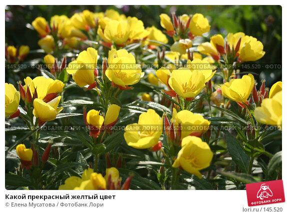 Купить «Какой прекрасный желтый цвет», фото № 145520, снято 8 июля 2006 г. (c) Елена Мусатова / Фотобанк Лори