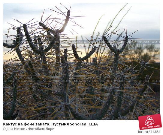 Кактус на фоне заката. Пустыня Sonoran. США, фото № 41884, снято 7 февраля 2007 г. (c) Julia Nelson / Фотобанк Лори
