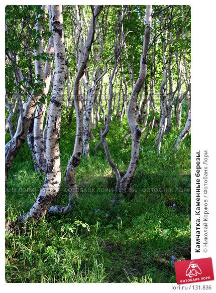 Камчатка. Каменные березы., фото № 131836, снято 30 июля 2007 г. (c) Николай Коржов / Фотобанк Лори