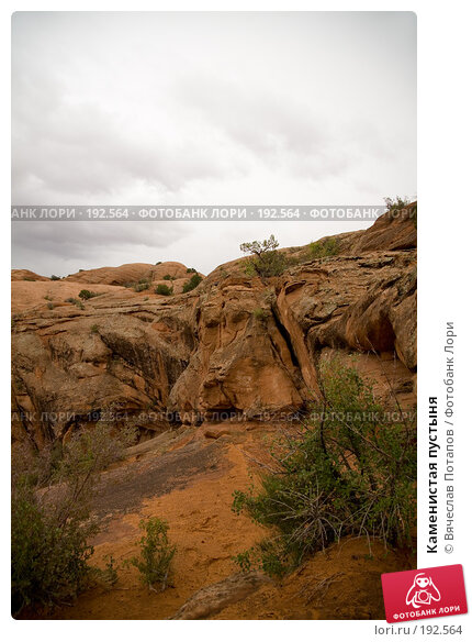Каменистая пустыня, фото № 192564, снято 6 октября 2007 г. (c) Вячеслав Потапов / Фотобанк Лори