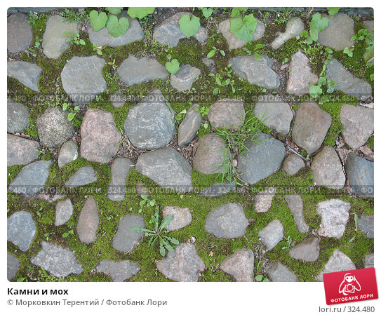 Купить «Камни и мох», фото № 324480, снято 17 мая 2008 г. (c) Морковкин Терентий / Фотобанк Лори