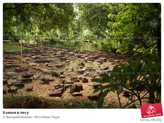 Купить «Камни в лесу», фото № 95072, снято 13 июня 2007 г. (c) Валерий Шанин / Фотобанк Лори