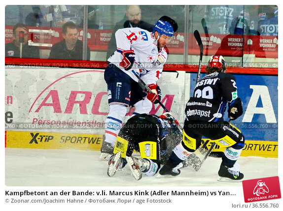 Kampfbetont an der Bande: v.li. Marcus Kink (Adler Mannheim) vs Yan... Стоковое фото, фотограф Zoonar.com/Joachim Hahne / age Fotostock / Фотобанк Лори