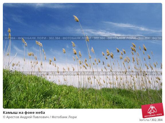 Камыш на фоне неба, фото № 302384, снято 20 апреля 2008 г. (c) Арестов Андрей Павлович / Фотобанк Лори