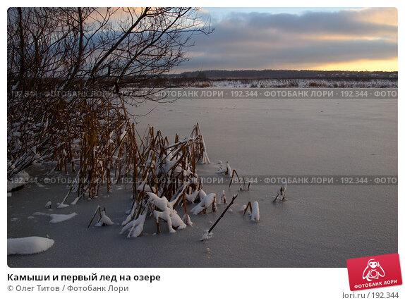 Камыши и первый лед на озере, фото № 192344, снято 11 ноября 2006 г. (c) Олег Титов / Фотобанк Лори