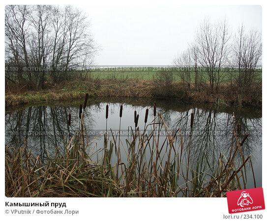 Камышиный пруд, фото № 234100, снято 5 ноября 2004 г. (c) VPutnik / Фотобанк Лори