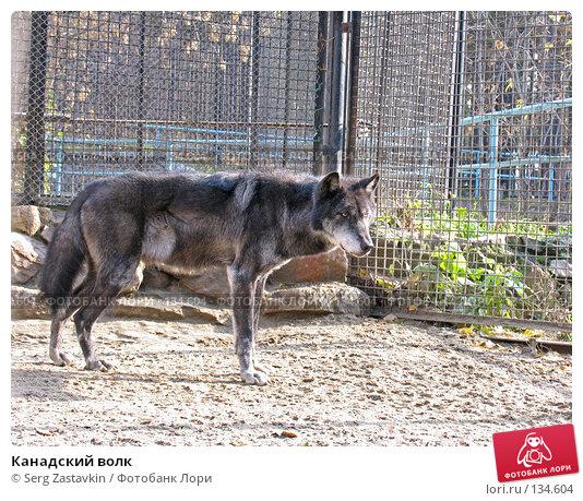 Канадский волк, фото № 134604, снято 10 октября 2004 г. (c) Serg Zastavkin / Фотобанк Лори