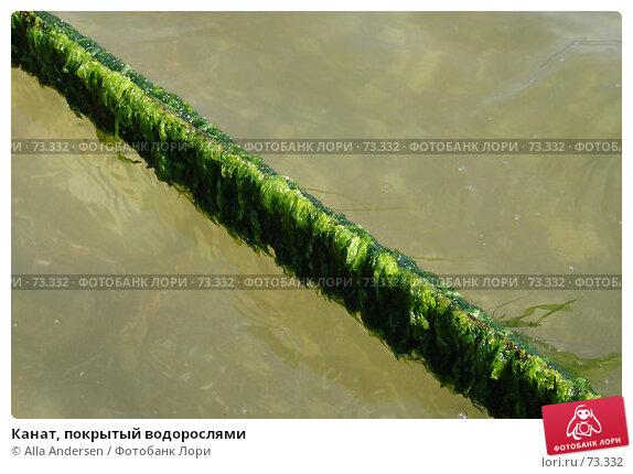 Канат, покрытый водорослями, фото № 73332, снято 11 сентября 2005 г. (c) Alla Andersen / Фотобанк Лори