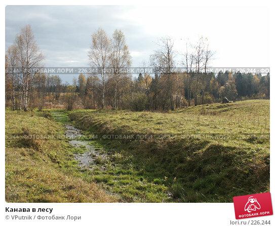 Канава в лесу, фото № 226244, снято 8 октября 2005 г. (c) VPutnik / Фотобанк Лори
