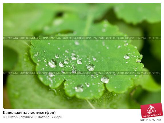 Капельки на листике (фон), фото № 97244, снято 7 октября 2007 г. (c) Виктор Савушкин / Фотобанк Лори