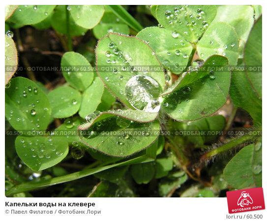 Капельки воды на клевере, фото № 60500, снято 28 марта 2006 г. (c) Павел Филатов / Фотобанк Лори