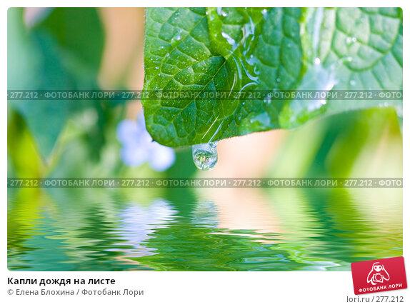 Купить «Капли дождя на листе», фото № 277212, снято 4 мая 2008 г. (c) Елена Блохина / Фотобанк Лори