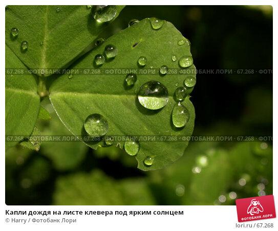 Капли дождя на листе клевера под ярким солнцем, фото № 67268, снято 13 мая 2005 г. (c) Harry / Фотобанк Лори