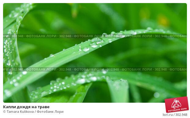 Капли дождя на траве, фото № 302948, снято 27 мая 2008 г. (c) Tamara Kulikova / Фотобанк Лори