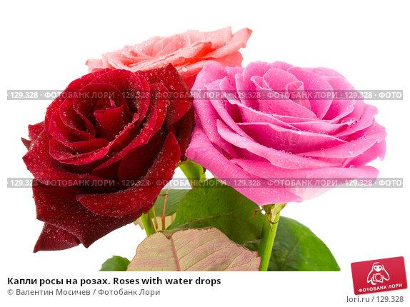Капли росы на розах. Roses with water drops, фото № 129328, снято 3 марта 2007 г. (c) Валентин Мосичев / Фотобанк Лори