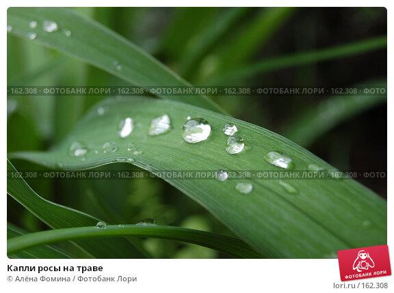 Капли росы на траве, фото № 162308, снято 17 мая 2006 г. (c) Алёна Фомина / Фотобанк Лори