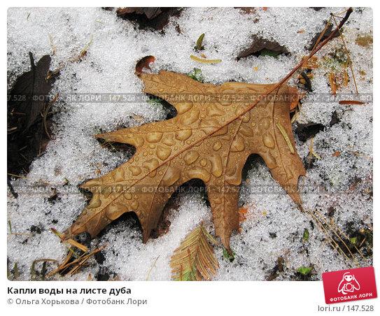 Капли воды на листе дуба, фото № 147528, снято 11 ноября 2007 г. (c) Ольга Хорькова / Фотобанк Лори