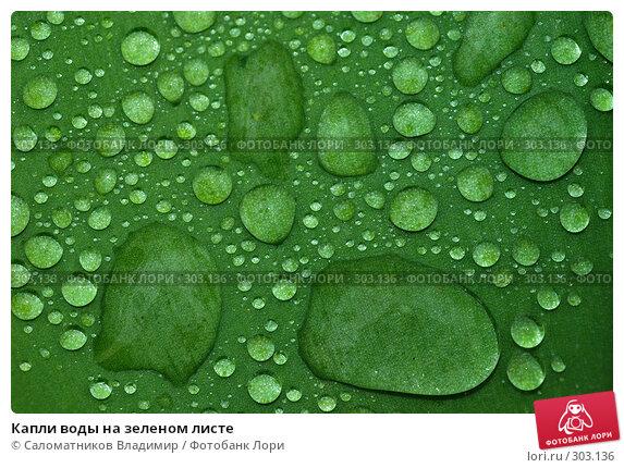 Купить «Капли воды на зеленом листе», фото № 303136, снято 24 мая 2008 г. (c) Саломатников Владимир / Фотобанк Лори