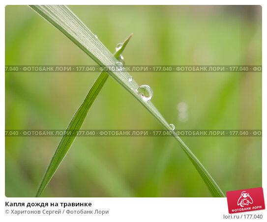 Капля дождя на травинке, фото № 177040, снято 14 апреля 2006 г. (c) Харитонов Сергей / Фотобанк Лори