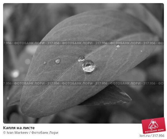 Купить «Капля на листе», фото № 317956, снято 10 июня 2008 г. (c) Ivan Markeev / Фотобанк Лори