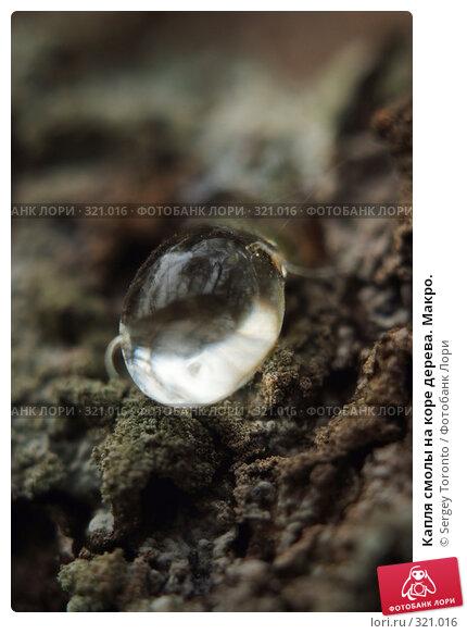 Купить «Капля смолы на коре дерева. Макро.», фото № 321016, снято 13 апреля 2008 г. (c) Sergey Toronto / Фотобанк Лори