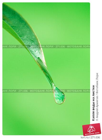 Капля воды на листке, фото № 271036, снято 9 октября 2007 г. (c) Андрей Армягов / Фотобанк Лори