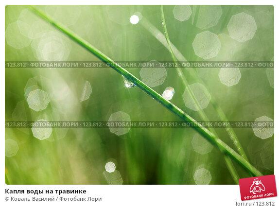 Купить «Капля воды на травинке», фото № 123812, снято 25 мая 2007 г. (c) Коваль Василий / Фотобанк Лори