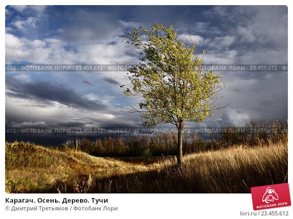 Купить «Карагач. Осень. Дерево. Тучи», фото № 23455612, снято 22 марта 2019 г. (c) Дмитрий Третьяков / Фотобанк Лори